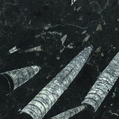 Marbre Fossil black